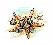 Starfish And Shells On A Summer Beach In The Sand From A Splash Of Watercolor, Hand Drawn Sketch. Ve poster
