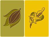 Cocoa Bean And Vanilla Pods. Vector Illustration.