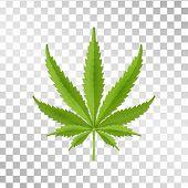 Hemp Leaf Isolated On Transparent Background. Realistic Marijuana. Cannabis Plant. Vector Illustrati poster
