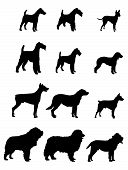 image of newfoundland puppy  - Set of Vector Silhouettes different kinds dogs - JPG