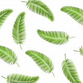 Palm Leaf Seamless Pattern Background. Palm Leaves Background. Realistic Palm Leaf. Leaves Palm On B poster