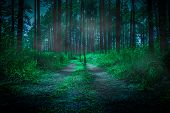 Dark Forest In Fog In The Morning With Path Through A Dark Forest. Nature Background Dark Foggy Fell poster