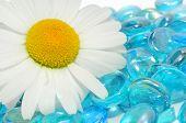 Flor de camomila branca bonita em pedras de vidro azul