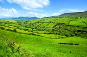 Hills Of Green Rural Fields In The Countryside Of Ireland. Dingle Peninsula, County Kerry. poster