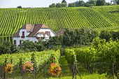 Hunawihr (alsace) - House And Vineyard