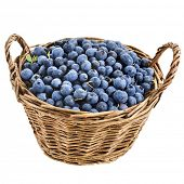 blueberry in basket isolated over a white