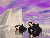 Orca Journey - 3D Render