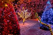 Colorful Christmas Lights On Trees