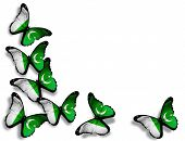 stock photo of pakistani flag  - Pakistani flag butterflies isolated on white background - JPG