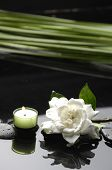 spa healthcare concept-White gardenia and black stones with palm leaf