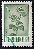 a stamp printed in Argentina shows Sunflower Helianthus Annuus