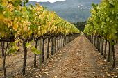 Vineyard Row, Napa Valley,California