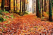 Footpath through a colorful forest in autumn
