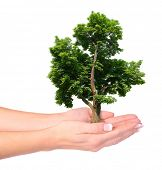 Hands and tree isolated on white background