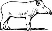 picture of tapir  - Tapir standing on the ground on white background - JPG