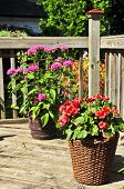 stock photo of flower pots  - Wooden house deck decorated with flower pots - JPG