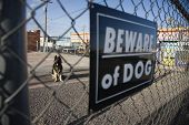 Guard dog behind 'Beware of dog' sign on fence