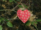 heart shape in forest