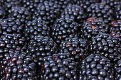 Sweet blackberries close-up