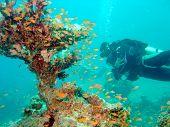 Diver mit Korallen