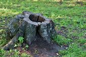 pic of hollow log  - The stump of an old tree closeup on a forest glade - JPG
