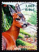 Postage Stamp France 2001 Roe Deer, Capreolus Capreolus