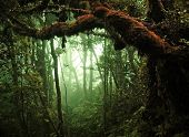 foto of tropical rainforest  - tropical rain forest - JPG