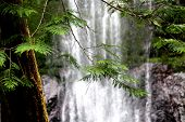 Marymere Falls...