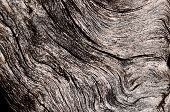 Gnarly wood texture
