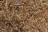 Anthill of a sunny day , close up