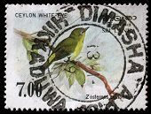 SRI LANKA - CIRCA 1988: A stamp printed in the Republic of Sri Lanka shows the Sri Lanka white-eye bird, Zosterops ceylonensis, circa 1988