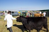 Agricultural show