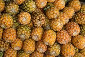 stock photo of sabbatical  - pineapple Fruit in rural market Chiang Mai Thailand - JPG