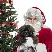 Close-up of Santa Claus holding a lapdog, isolated on white