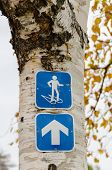 Signs of snowshoeing trail on birch trunk