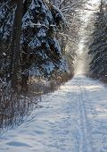 Forest Dirt Road In Snowfall