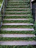 Steps With Ivy