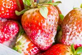 Strawberry With Mold Fungus