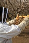 foto of honey bee hive  - Genuine Unidentifiable Bee Keepers inspect their Bee Hives and their Bees to make sure they are healthy and doing their job of pollinating plants and making honey - JPG