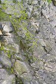Rock Detail Around Perros-guirec
