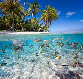 Beautiful tropical island under and above water