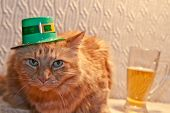 St. Patrick's Day Cat