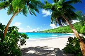 stock photo of bay leaf  - beach Takamaka - JPG