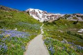 Trail To Mount Rainier