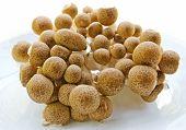 Brown Beech Mushrooms