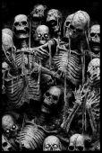 Scarry Bones