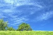 Blue sky with green grass and tree