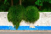 White Wall With Green Plants, Obidos (portugal)