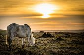 Horse Grazing in the sunset