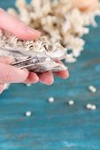 picture of pearl-oyster  - Hand with tweezers holding pearl and oyster on wooden background - JPG